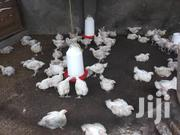Great White Chicken | Livestock & Poultry for sale in Dar es Salaam, Kinondoni
